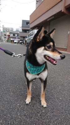 DSC_0744_01.JPG